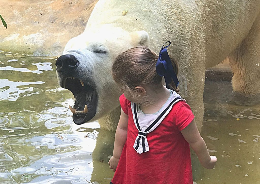 Miss M and one of the polar bears in conversation at Wuppertal Zoo