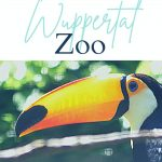 Pin: The absolute highlights: Wuppertal Zoo, with image of a toucan