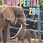 What not to miss at Wuppertal Zoo & why you should go: with image of mother elephant and calf